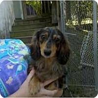 Adopt A Pet :: Rickie - Niceville, FL