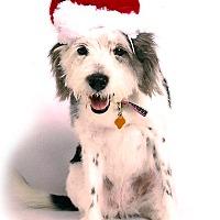 Adopt A Pet :: Lucy - Wilmette, IL