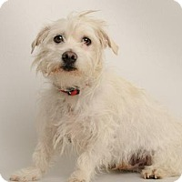 Terrier (Unknown Type, Medium) Mix Dog for adoption in Santa Cruz, California - Milo
