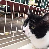 Adopt A Pet :: Jade - Bedford, MA