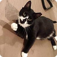 Adopt A Pet :: Jackson (Hinton) - Colmar, PA