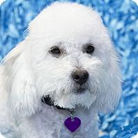 Adopt A Pet :: Pepsi - San Diego, CA