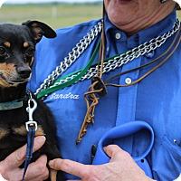Adopt A Pet :: Maggie - Brattleboro, VT