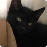 Adopt A Pet :: Filbert - East Brunswick, NJ