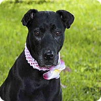 Adopt A Pet :: ALLI - West Palm Beach, FL