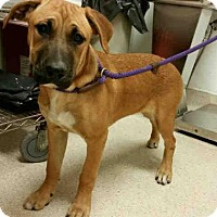 Adopt A Pet :: A1016960 is IN DANGER at Bakersfield Shelter - Beverly Hills, CA