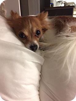 Small Dog Rescue Indianapolis