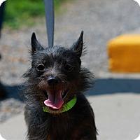 Adopt A Pet :: Rescue Annie - Batavia, NY