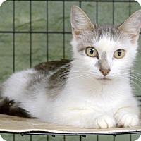 Adopt A Pet :: Daisy - Marlinton, WV