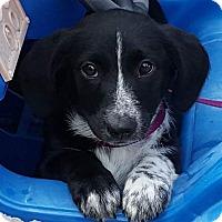 Adopt A Pet :: Dottie - West Bend, WI