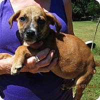 Adopt A Pet :: FONZIE - Rocky Hill, CT