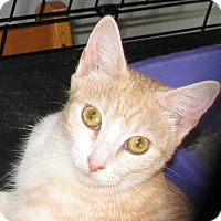 Adopt A Pet :: Dreamsicle - Bedford, VA