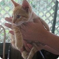 Adopt A Pet :: Mango - New Smyrna Beach, FL