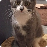Adopt A Pet :: Shelby - Somerset, KY