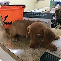 Adopt A Pet :: Joon - Patterson, NY
