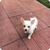 Adopt A Pet :: Jamie - Davie, FL
