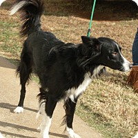 Border Collie Mix Dog for adoption in Somerset, Kentucky - Jade