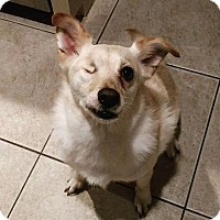 Pug/Dachshund Mix Dog for adoption in Houston, Texas - Tom