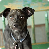 Adopt A Pet :: Ariel - San Antonio, TX