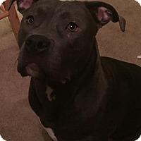 Adopt A Pet :: Delilah - Anchorage, AK