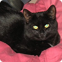 Adopt A Pet :: Raven - Queensbury, NY