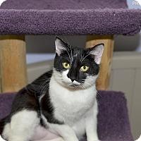 Adopt A Pet :: Thunder - Medina, OH
