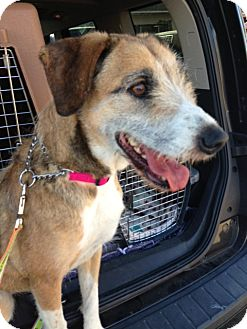 Terrier (Unknown Type, Medium) Mix Dog for adoption in San Diego, California - Avery URGENT