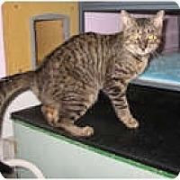 Adopt A Pet :: Lewis - Shelton, WA