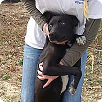 Adopt A Pet :: Tux - Fort Valley, GA
