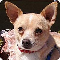 Adopt A Pet :: Ralphie - Gilbert, AZ