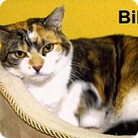 Adopt A Pet :: Billie - Medway, MA