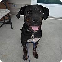 Adopt A Pet :: Jade - Jacksonville, NC