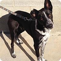 Adopt A Pet :: VAN GOGH - San Pedro, CA