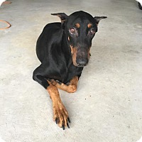 Adopt A Pet :: Eleanor - Houston, TX