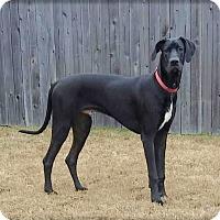 Adopt A Pet :: Tyson - Austin, TX