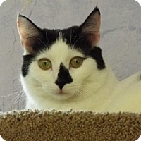 Adopt A Pet :: Peach - Grants Pass, OR