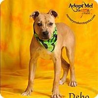 Adopt A Pet :: Debo - Topeka, KS