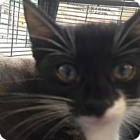 Adopt A Pet :: Chan - Sarasota, FL