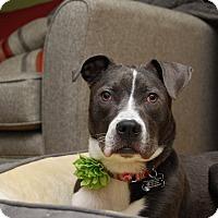 Adopt A Pet :: Farrah - Eastpointe, MI