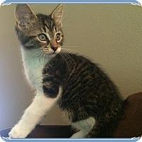 Adopt A Pet :: Hercules - Mt. Prospect, IL