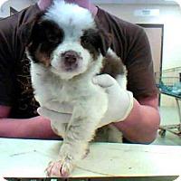Adopt A Pet :: LAVERNE - Conroe, TX