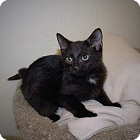 Adopt A Pet :: Hammer - Wilmington, OH