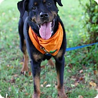 Adopt A Pet :: Dee - Rexford, NY