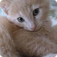 Adopt A Pet :: Joey - Lancaster, PA