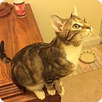 Adopt A Pet :: Ridley - Smithfield, NC