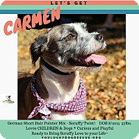 German Wirehaired Pointer Mix Dog for adoption in Alpharetta, Georgia - Carmen