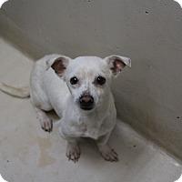 Adopt A Pet :: A36 Aiden - Odessa, TX