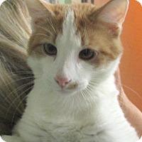 Adopt A Pet :: Hundley - Reeds Spring, MO