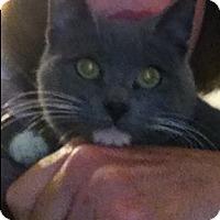 Adopt A Pet :: Alaina - Eureka, CA