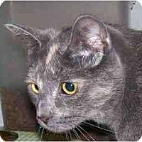 Adopt A Pet :: Gumdrop - Duluth, GA